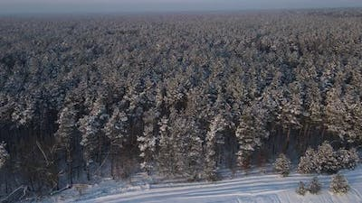 Snow-covered Coniferous Forest, Swept Forest Trails