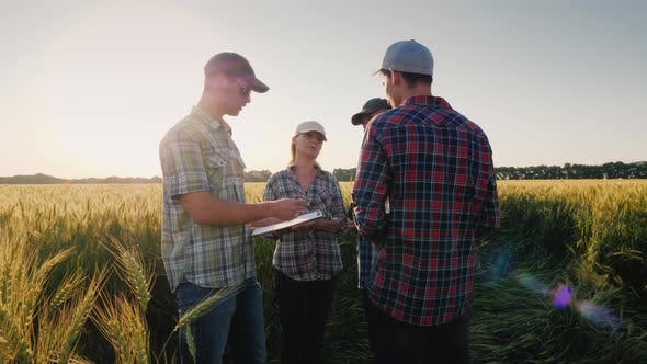 Thumbnail for A Young Team of Farmers Communicates on a Wheat Field