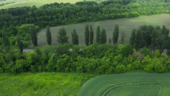 Thumbnail for Aerial View Trees Near The Road