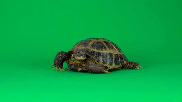 Turtle on a Green Background Screen