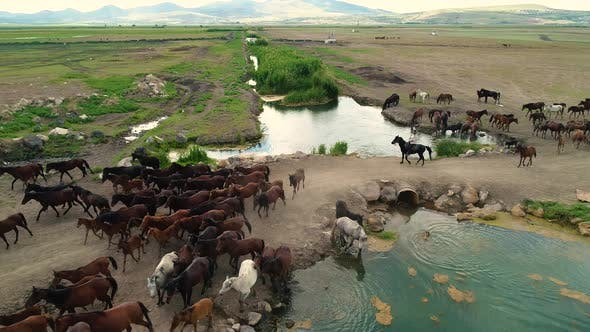 Thumbnail for Aerial Footage Of Horses  Cowboy