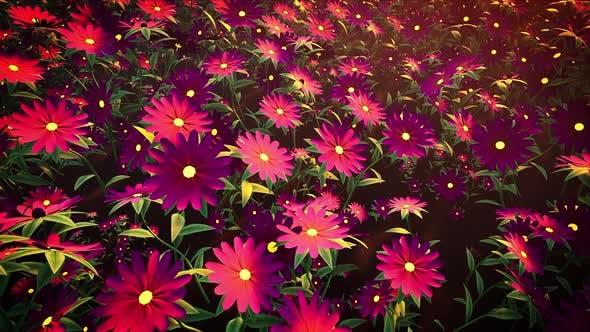 Thumbnail for Flower Field Loop #03 4k