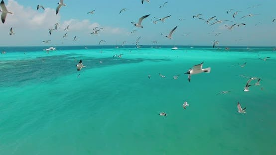 Thumbnail for Flying thought seagulls
