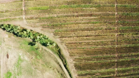 Thumbnail for Aerial Footage: Top Down View of Beautiful Vineyard