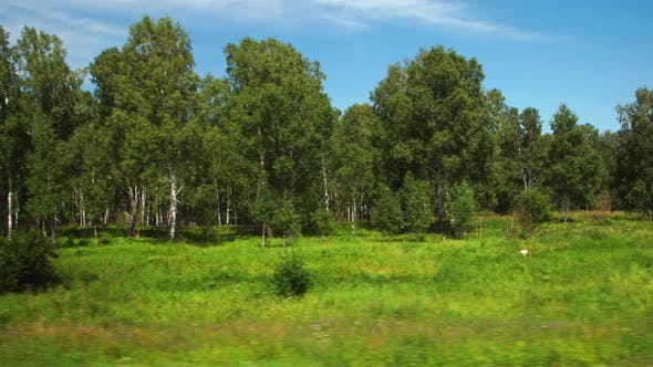 Thumbnail for Moving along a wild fields and green forest