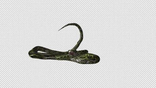 Snake on Ground - Green Serpent - Transparent Loop
