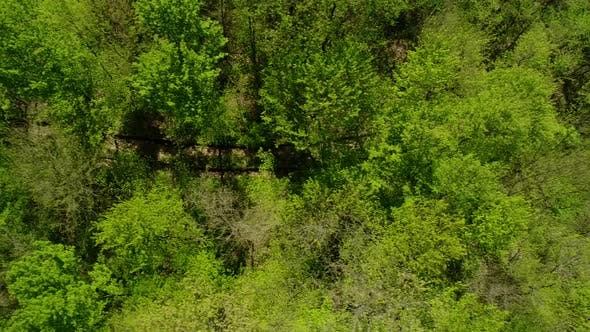Thumbnail for Aerial View Of Trees