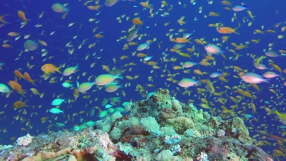 Cover Image for Underwater Scene Colorful World