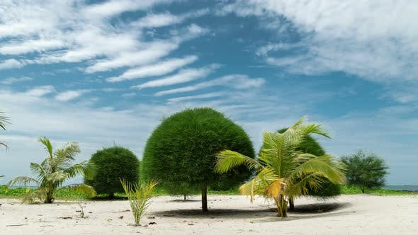 Thumbnail for Mushroom Trees on paradise Malibu sand beach in Koh Phangan island, Thailand