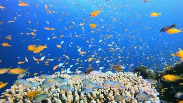 Thumbnail for Sea World Life