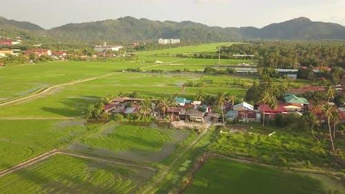 Malays village near paddy field