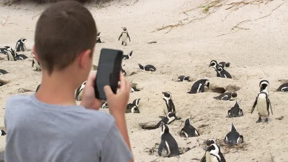 Boy Looking at African Penguins and Shoots on the Camera in the Phone Boulders Beach Cape TownSouth