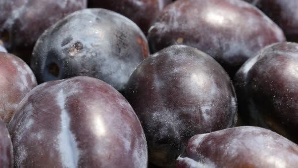 Thumbnail for Organic common plums from genus Prunus slow tilt 4K footage