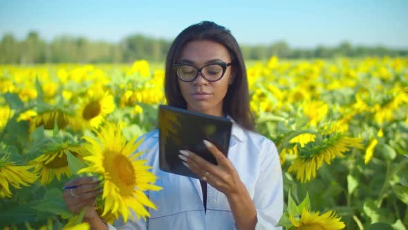 Thumbnail for Agronomist Analyzing Sunflower Seed with Tablet Pc in Field