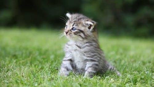 Tabby kitten sitting on grass