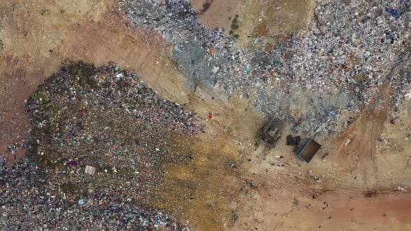 Black birds and white birds fly over rubbish dump site