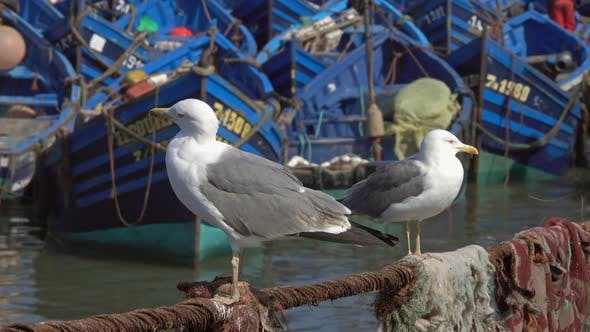 Thumbnail for Fishing Boats in Port of Essaouira and Seagulls