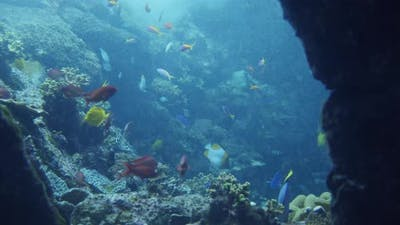 Tropical Underwater Sea Fishes