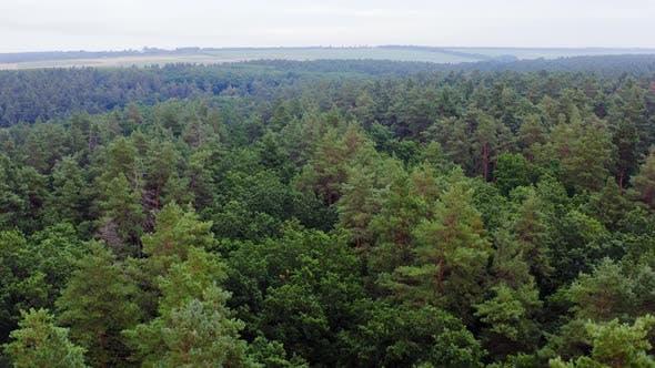 Thumbnail for Summer woodland