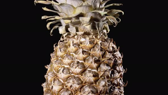 Thumbnail for Pineapple Rotates on a Black Background, Detail of Pineapple Scale Skin and Crown
