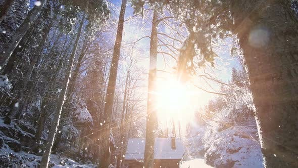 Thumbnail for Winter Weather Season Background of Snow Falling Nature Scenery