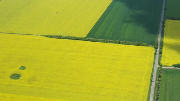 Thumbnail for Blooming Rapeseed Field 22