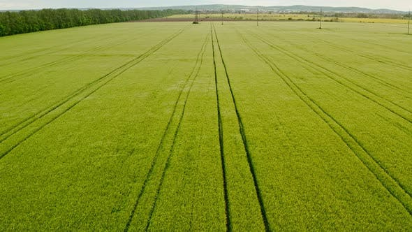 Thumbnail for Aerial Drone View Flight Over Green Blooming Field of Rapeseed with Lines From Tractor Tracks on