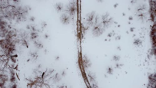 Snowy Forest And Bird Aerial