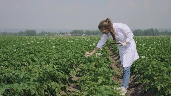 Thumbnail for Woman agronomist with tablet computer