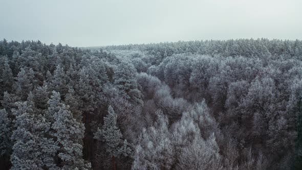 Thumbnail for Snowy Trees of Winter Landscape