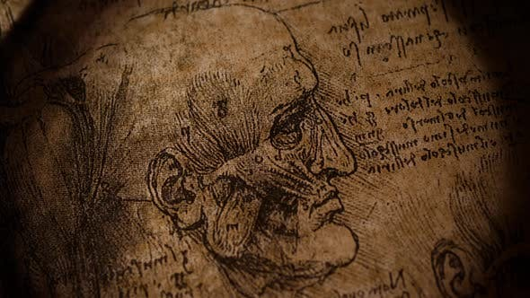 Thumbnail for Anatomyart