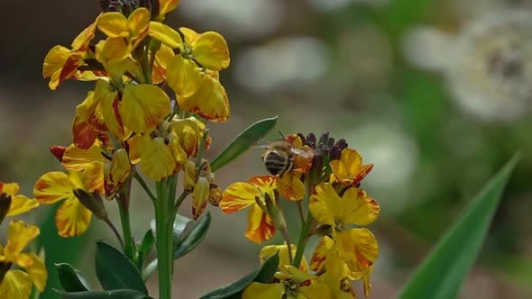 Thumbnail for Bee On A Flower