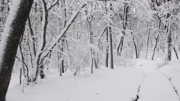 Cover Image for Road in Winter Forest, Panorama