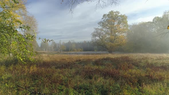 Thumbnail for Foggy Morning Landscape in Nature