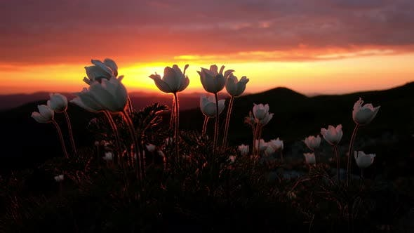 Thumbnail for Amazing Landscape with Magic White Flowers