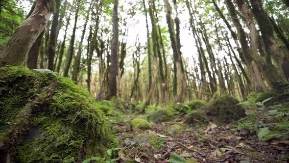 Thumbnail for Forest Floor