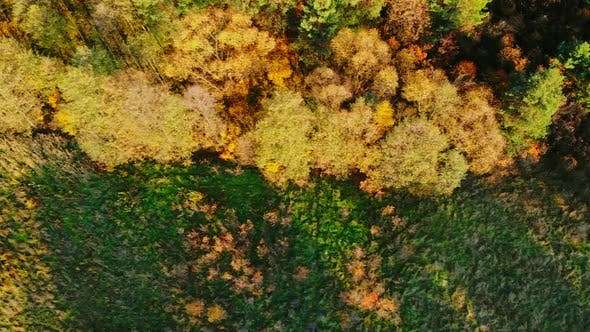 Thumbnail for Forest seen from above. Beautiful, colorful woods in autumn.