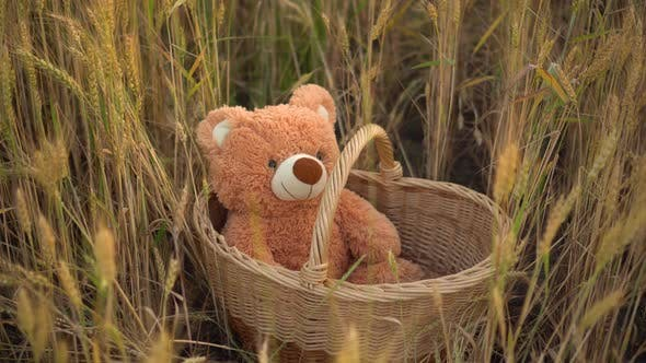 Thumbnail for A Teddy Bear Is Sitting in a Straw Basket in a Wheat Field.