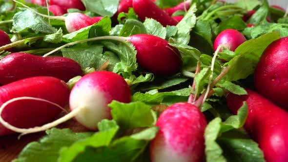Thumbnail for Radish Fruits 2