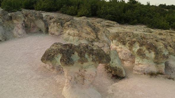 Thumbnail for The Natural Phenomenon Stone Mushrooms