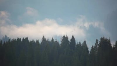 Shreds of Mist Over the Spruce Forest