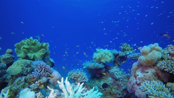 Unterwasserfarbenes Riff