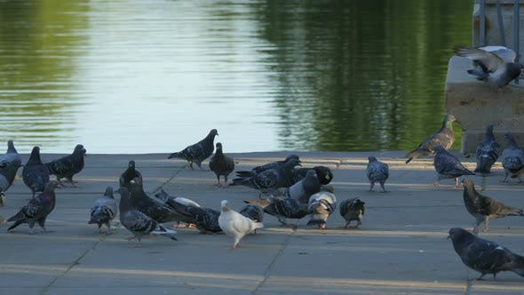 Pigeons on a waterfront