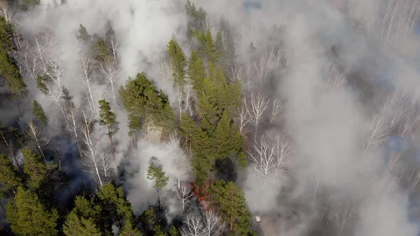 Forest on Hillside, Huge Wildfire with Thick Black Smoke
