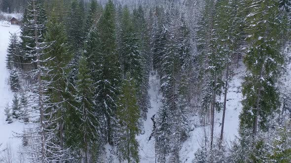 Aerial View Snow Covered Trees Mountains Winter