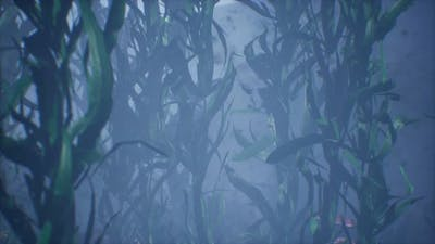 Underwater Grass Forest of Seaweed