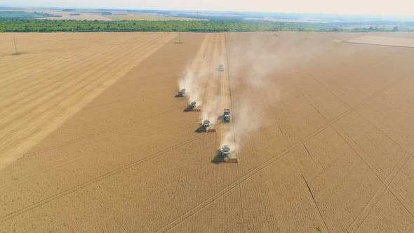 Top Down View of Harvester Machine Working in Wheat Field . Combine Agriculture Machine Harvesting