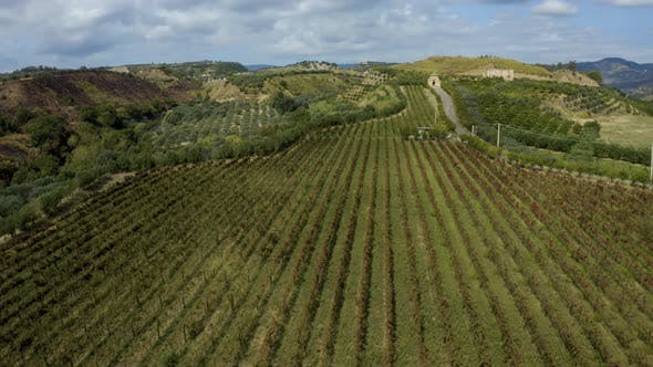 Thumbnail for Italian Vineyard