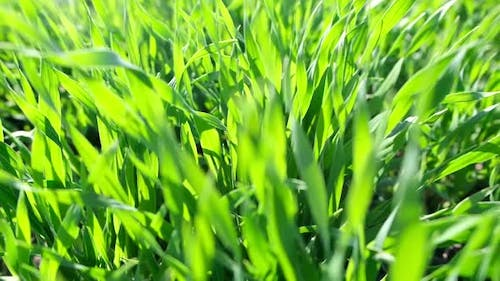 Beautiful Green Grass Shooting in Slow Motion