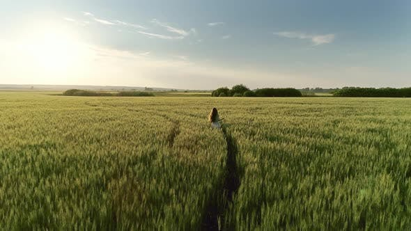 Thumbnail for Girl Walking in Wheat Field at Sunset, Aerial View